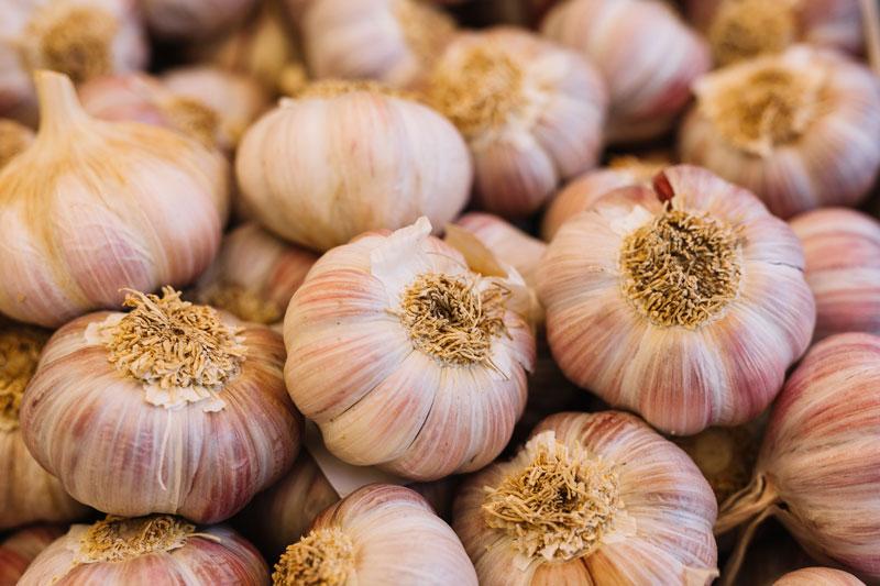 sadenie cesnaku