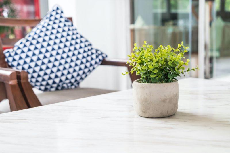 rastlina na bielom stole
