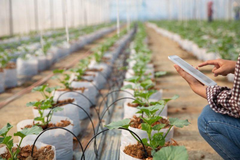 pestovanie rastlín vo fóliovníku