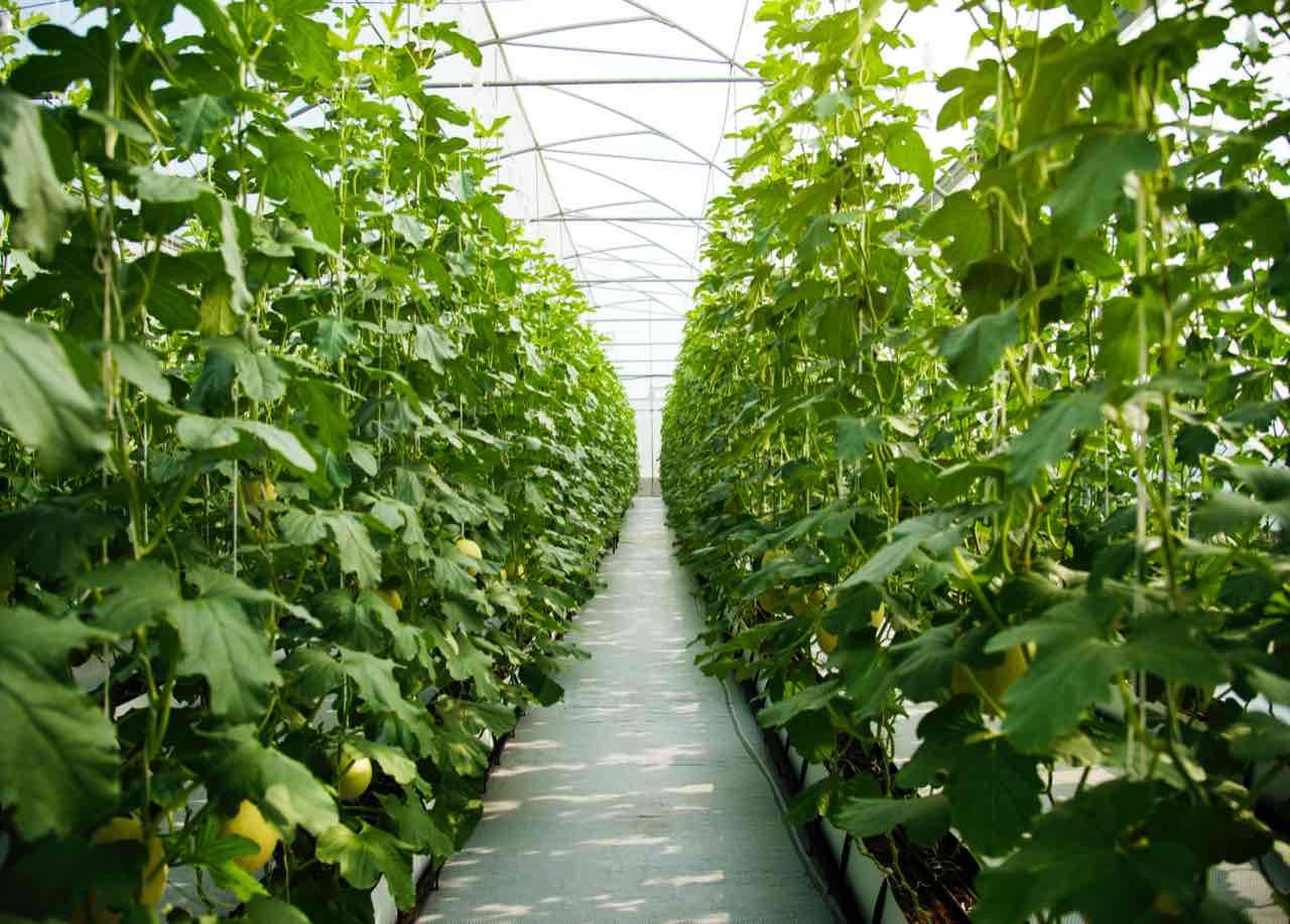skleník vo vnútri